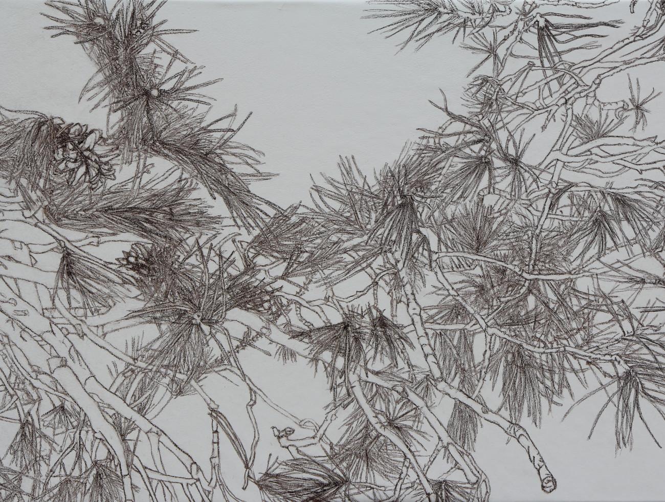 Anja Vorrath, Origo – Werkserie aus Plastiken, Zeichnungen und Radierungen Anja Vorrath